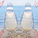 ラブリーなペンギンの待ち受け画像