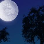 綺麗な月が印象的な待ち受け画像